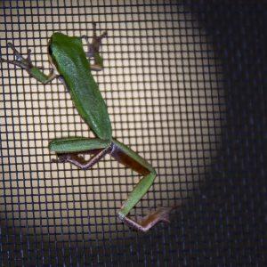 zanzariera anti animali insetti